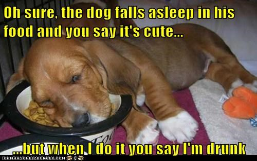 Oh sure, the dog falls asleep in his food and you say it's cute...  ...but when I do it you say I'm drunk