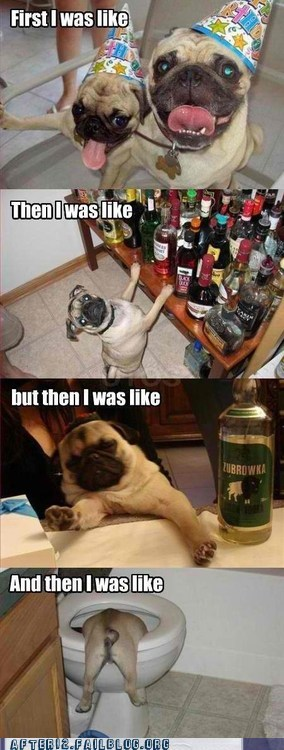 crunk critters,partying too hard,pugs,too drunk,too much