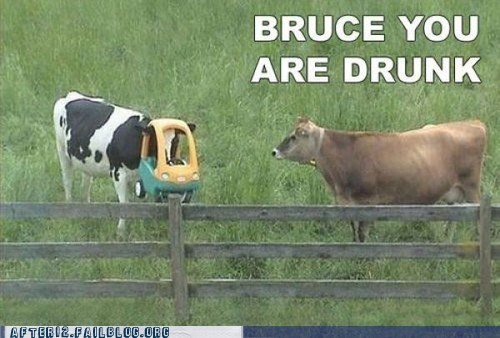 bruce cows crunk critters you are drunk - 6580823296