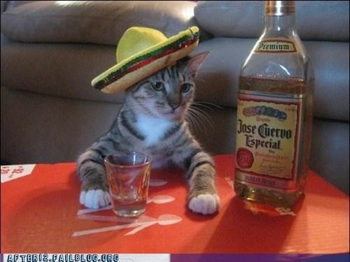 cat sombrero cuervo tequila - 6580831744