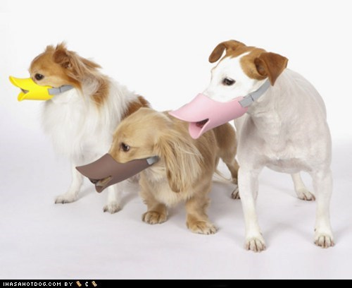 dog product,dogs,dogs dressed up,duck-billed,ducks,embarrassment,goggie swag,muzzle,wtf
