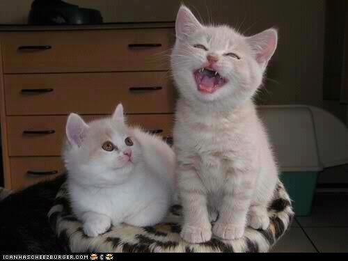 Cats cyoot kitteh of teh day kitten mouth open singing two cats - 6581001472