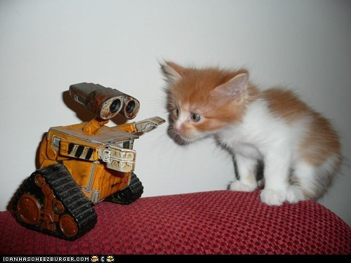 Cats cyoot kitteh of teh day disney kitten pixar robots toys wall.e - 6581022976