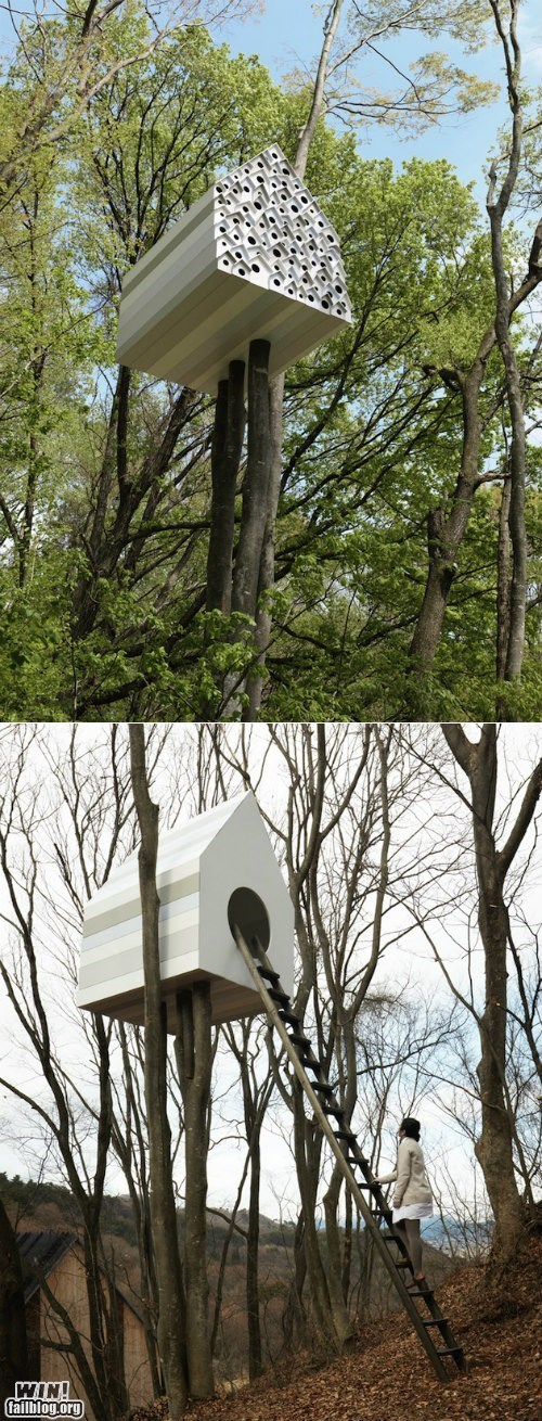 birdhouse design ladder tree house - 6581042176