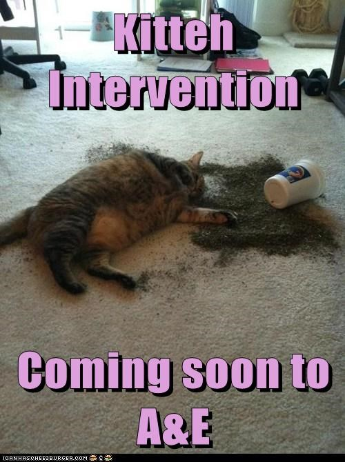 ae a&e captions Cats drugs intervention nip TV - 6581073664