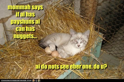 captions Cats chicken chicken nuggets eggs nuggets patient - 6581340672