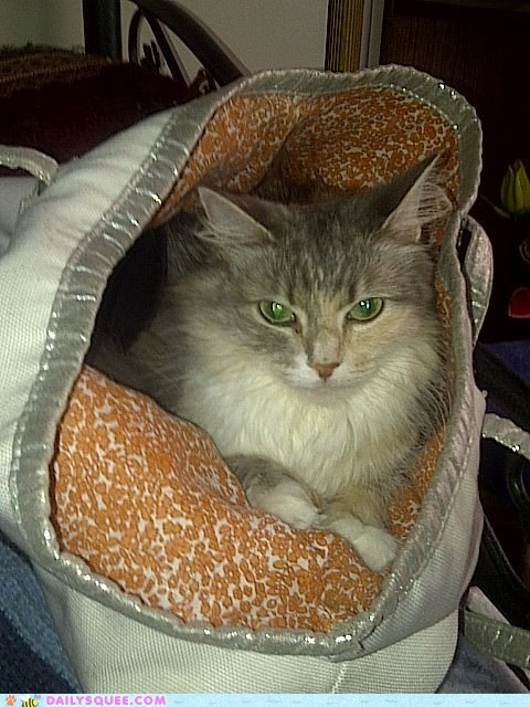 reader squee cat pet bag purse if i fits i sits - 6581385216