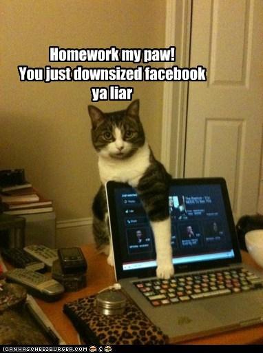 Homework my paw! You just downsized facebook ya liar