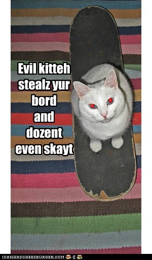 captions Cats evil skate skateboard - 6581398528
