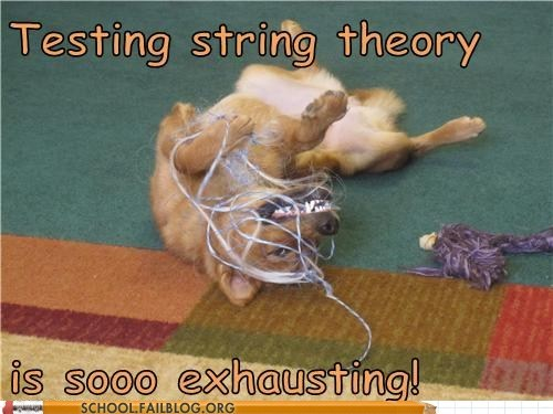 dogs,exhausting,quantum mechanics,String Theory