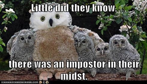 categoryvoting-page,fake,hoot,impostor,owls,stuffed animal,who