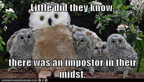 categoryvoting-page fake hoot impostor owls stuffed animal who - 6581641216