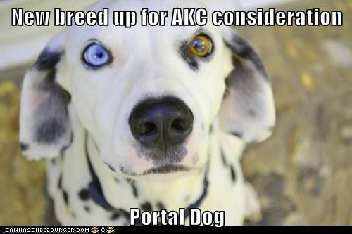dogs,dalmatian,heterochromia,Portal,new breed