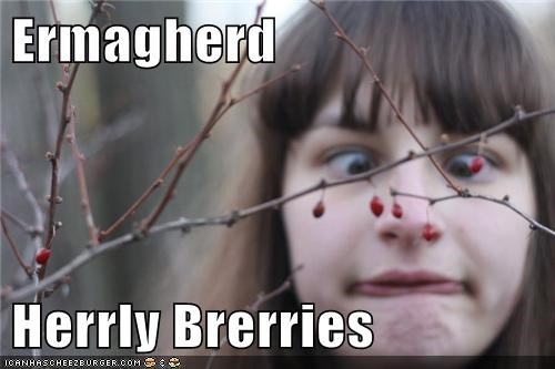 holly Ermahgerd berries - 6581729536
