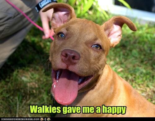 I Has A Hotdog Pitbull Funny Dog Pictures Dog Memes Puppy