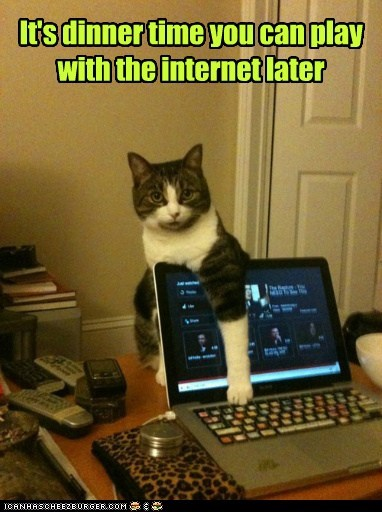 Cats,computer,dinner,internet,online