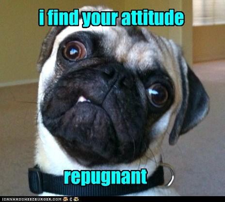 dogs pug repugnant pun sneer attitude snarl - 6581838336