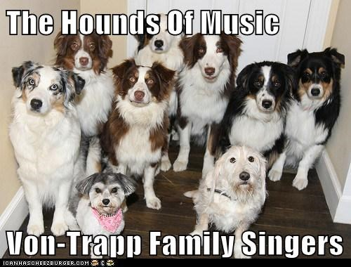 dogs,australian shepherd,furry,von Trapps,musical,sound of music