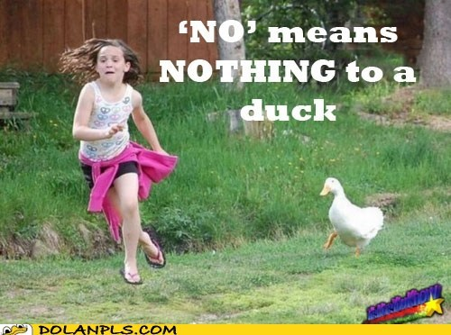 duck,goose,no means no,run,The More You Know