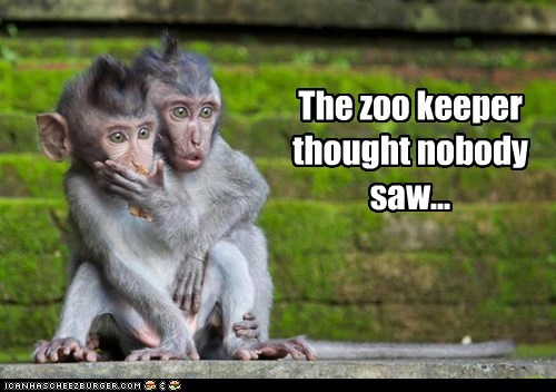 monkeys,nobody,shocked,witness,zoo keeper