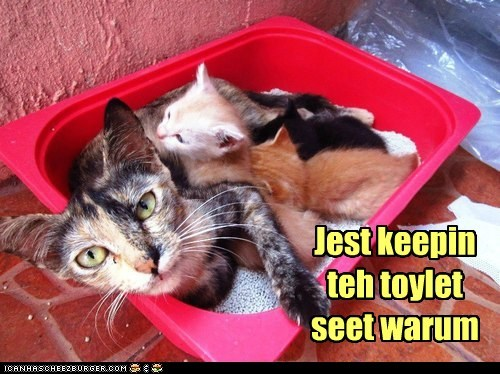 captions,Cats,toilet,toilet seat,warm