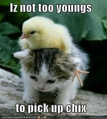 chick chix kitten lolcats lolkittehs pick up young