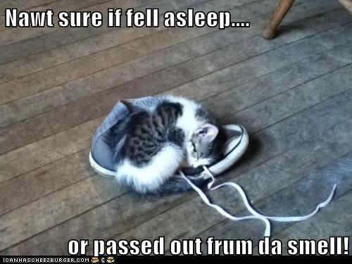 captions,Cats,gross,pass out,shoes,sleep,smell