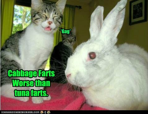 cabbage captions Cats fart gag gross poot rabbit tuna - 6582350848