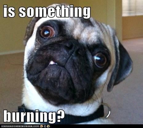 is something burning? - I Has A Hotdog - Dog Pictures