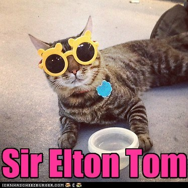 captions Cats elton john Music pop tom - 6582382336