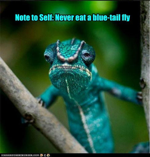 chameleon,note to self,fly,blue,eating,camouflage,changing colors