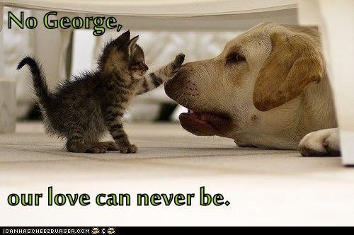 dogs labrador kitten cat forbidden love boop - 6582526976