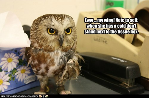 Owl,wing,tissues,cold,note to self,eww