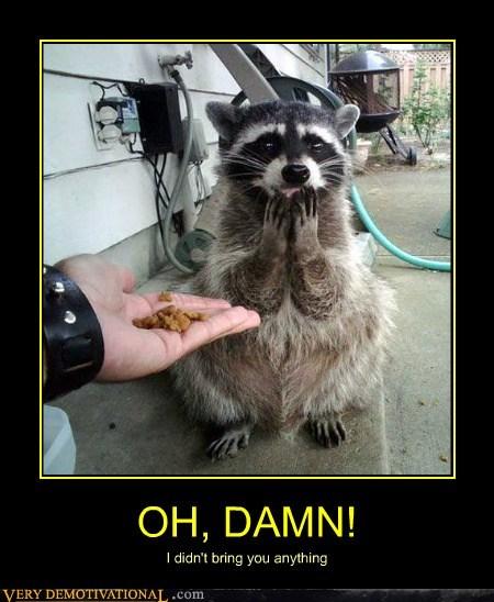 feel raccoons the shame - 6582688768