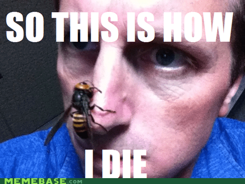 bees tho best animals Death friends nose wasp