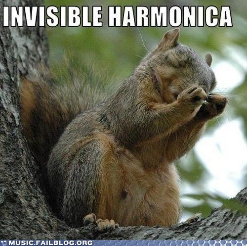 harmonica,squirrel