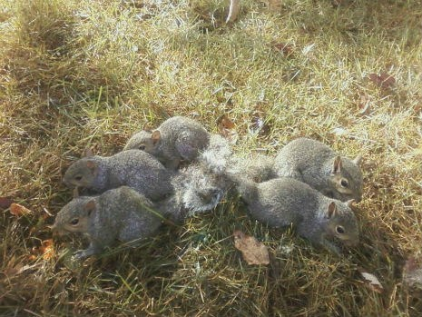 squirrels the daily what wtf - 6582938880