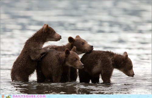 Babies,river,fishing,bears,bear cubs,squee,delightful insurance