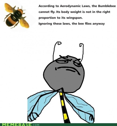 bees the best bees tho bees are a meme dummies f yeah - 6582983680
