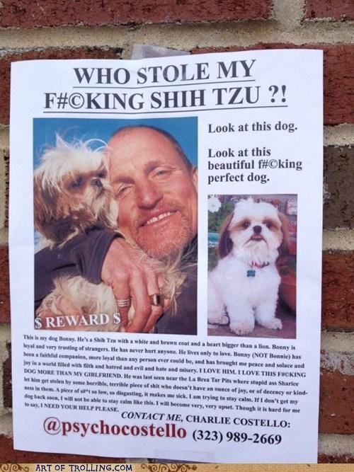 dogs lost shih tzu - 6583073280