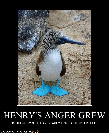 anger blue blue-footed boobies feet painting someone - 6583079680
