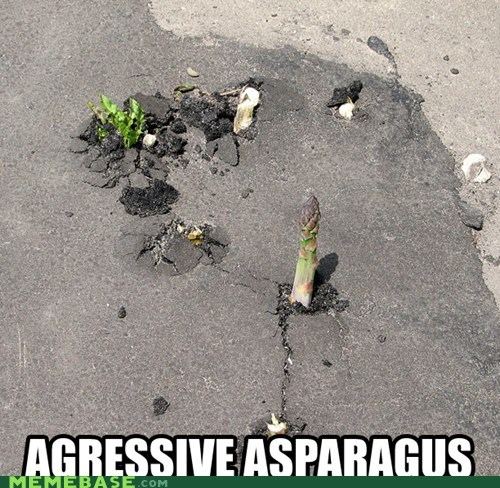 aggressive asparagus spell check street - 6583164160