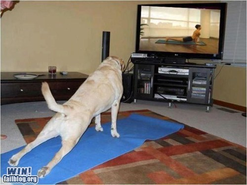 cute dogs pets pose yoga