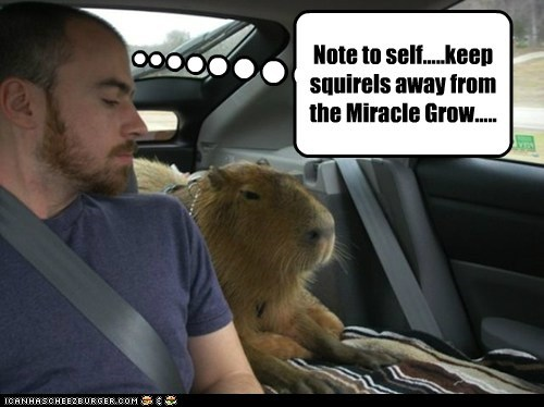 Note to self.....keep squirels away from the Miracle Grow.....