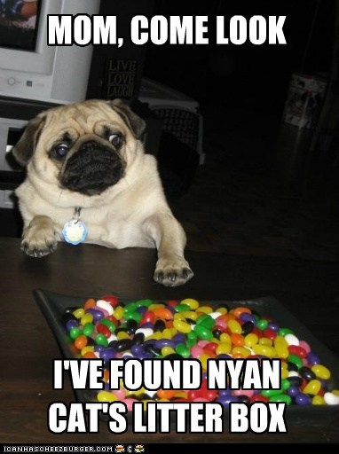 dogs,jelly bean,poop,pug,eww,Nyan Cat,litter box,rainbow