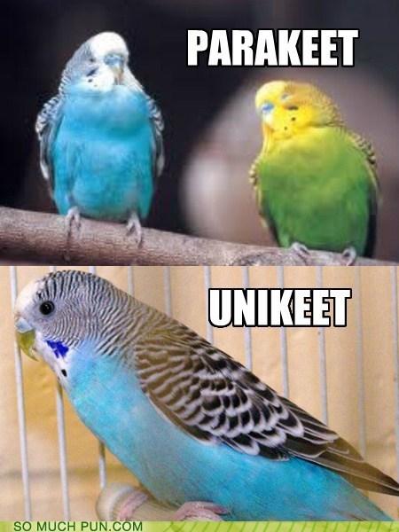 one pair parakeet prefix two uni