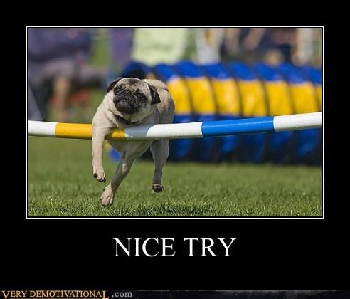 FAIL,jump,pug