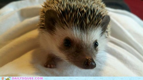baby,hedgehog,pet,reader squee,sonic