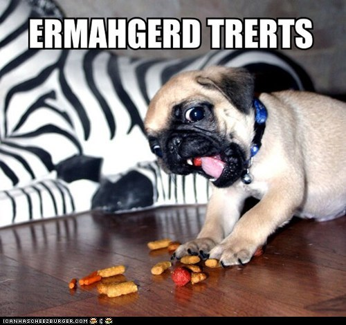 derp dogs Ermahgerd excited Memes pugs puppies treats - 6585045248