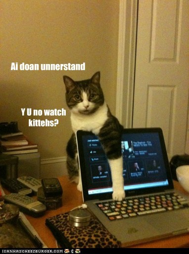Ai doan unnerstand Y U no watch kittehs?